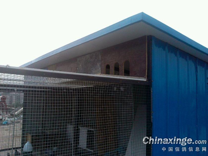 去年夏天建的鸽舍