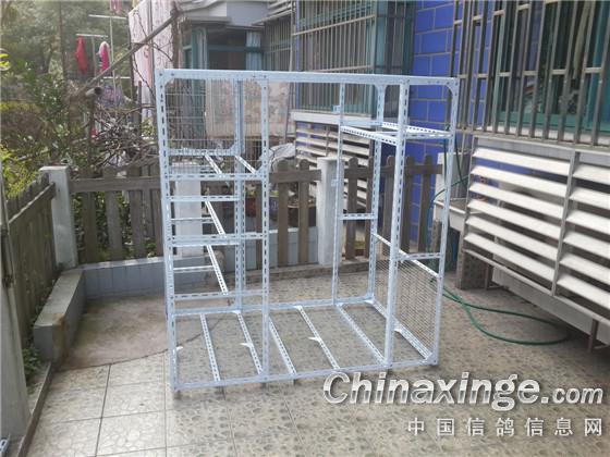 自己搭建的小鸽棚--中国信鸽信息网相册