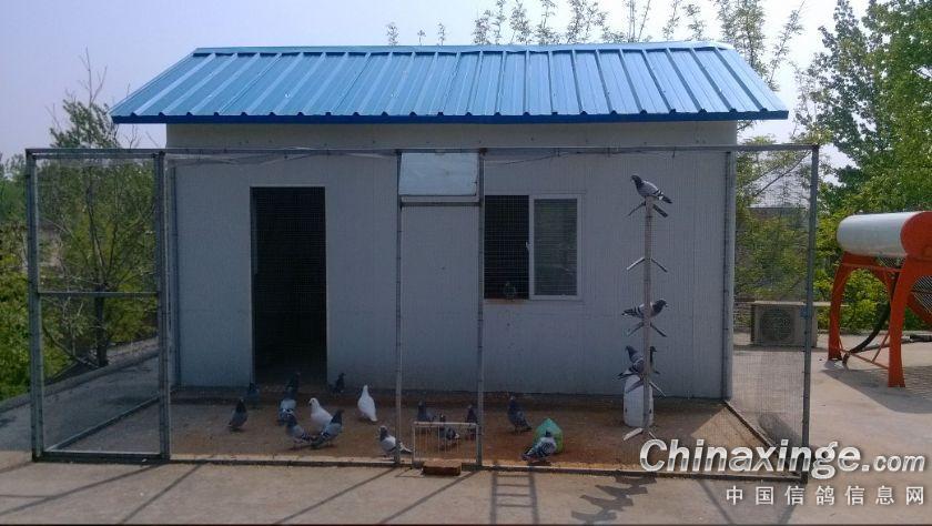 龙翔鸽舍--中国视频信息网信鸽v视频刻录相册图片