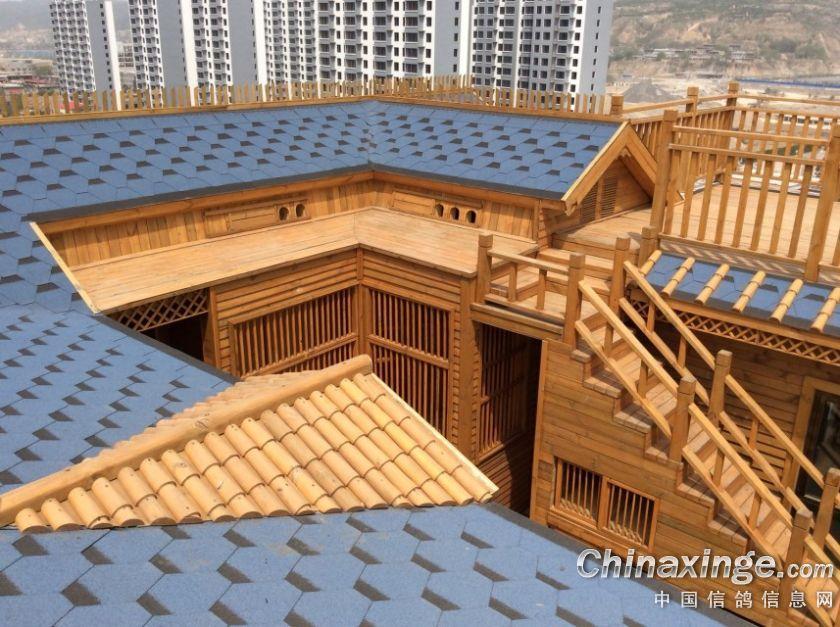 制作:速珑鸽舍设计制作; 山西离石百万鸽舍--中国信鸽信息网相册;