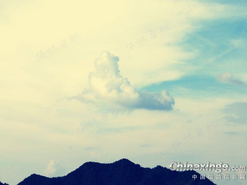 你站在楼顶看风景!--中国信鸽信息网相册