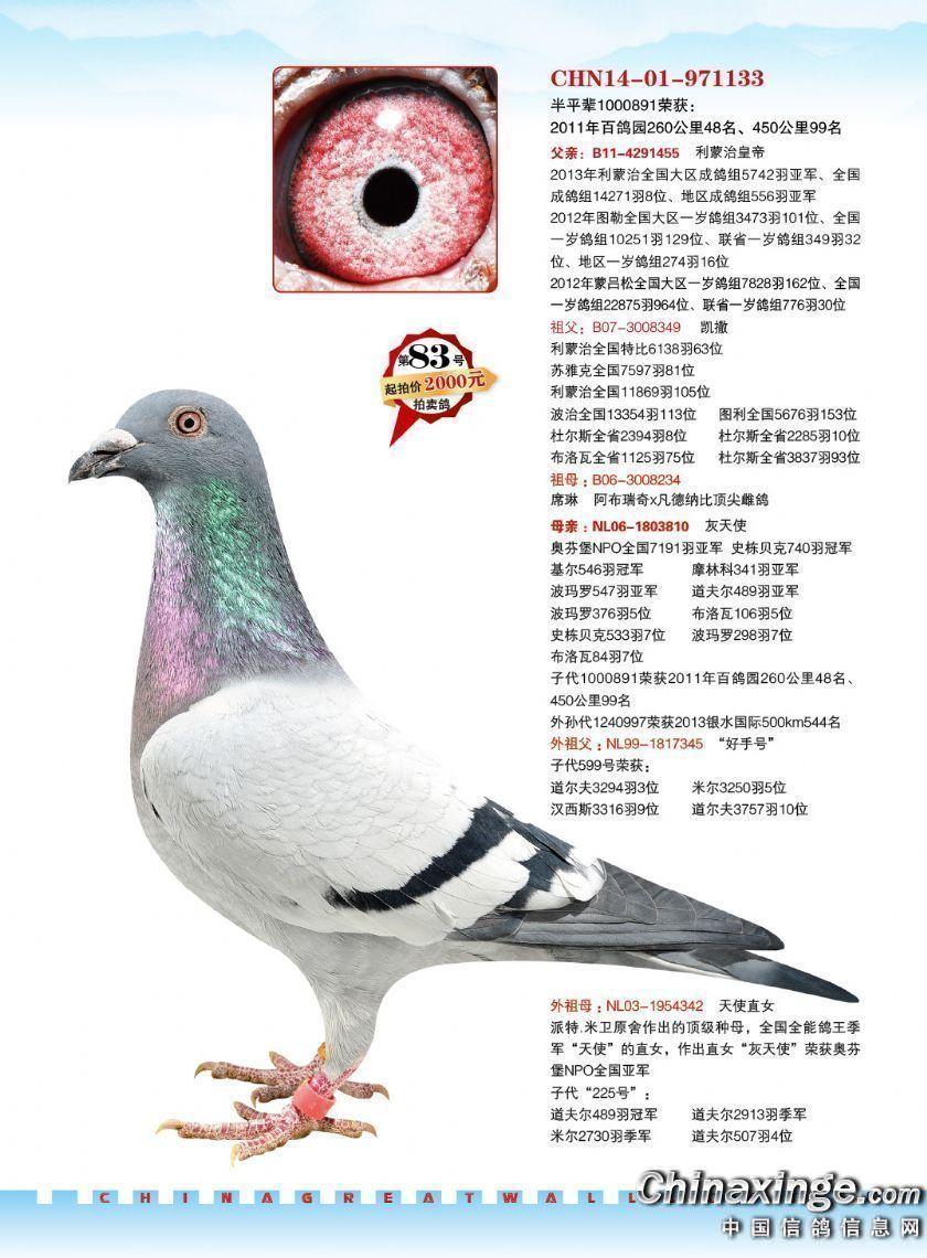 北京长城鸽业2015成都国奥拍卖会图片欣赏1--中国信鸽