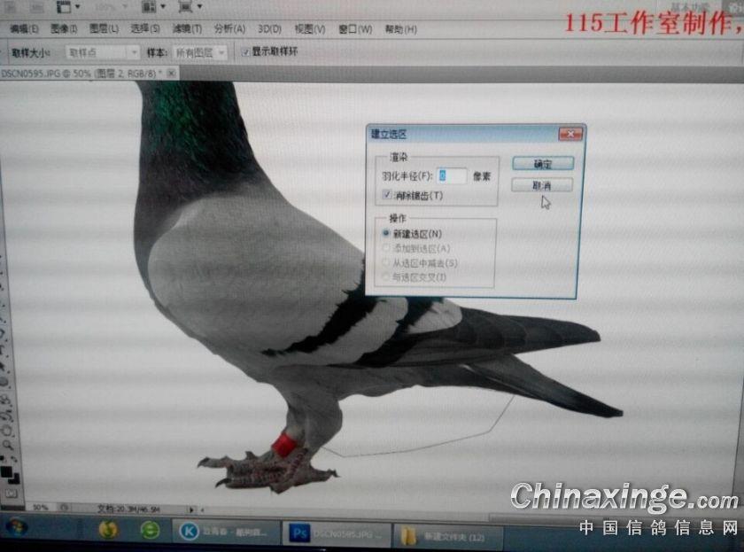 信鸽图片制作教程--中国信鸽信息网相册图片