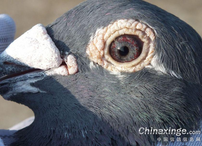 中国的动物眼睛最大的