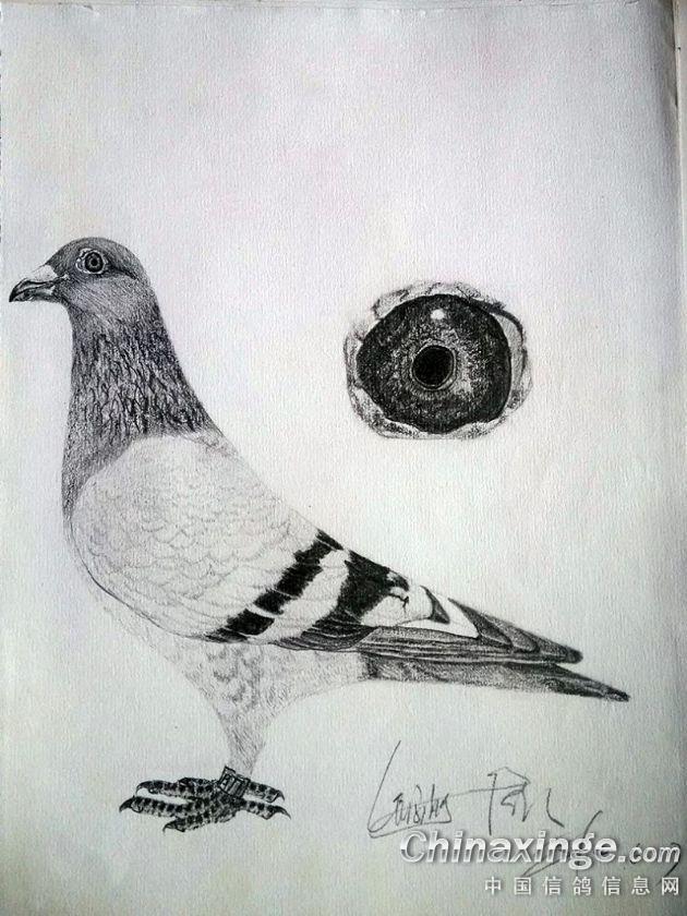 鸽子蛋绘画展示