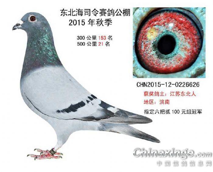 --中国信鸽信息网相册