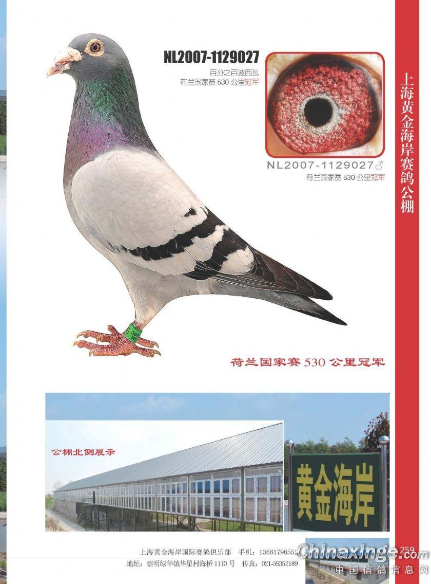 黄金海岸公棚拍卖会槌响上海滩(图)-中国信鸽信息网