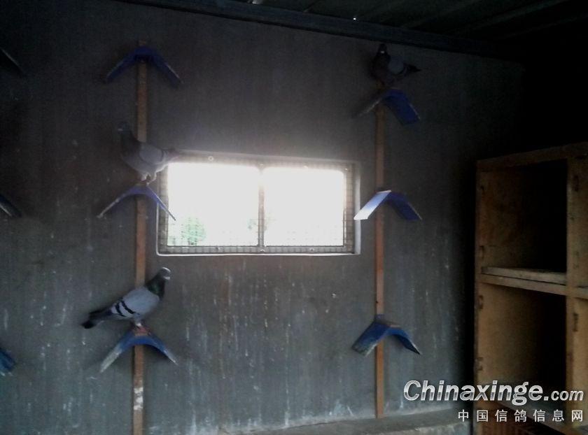 我的鸽舍 我的家