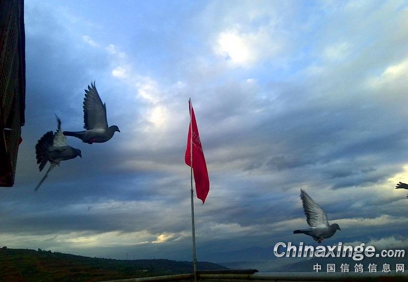 蓝天 白鸽 红旗 手绘