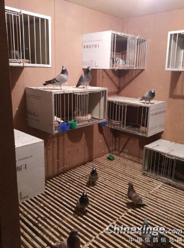 种鸽棚内部设计图片