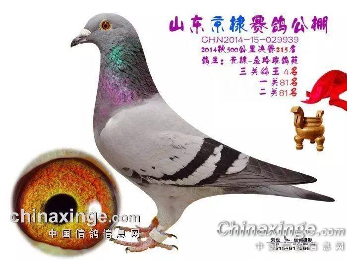 美女馒头�9�NxZ~ZJ~XZ_2014年京棣赛鸽中心决赛215名,三关鸽王4名
