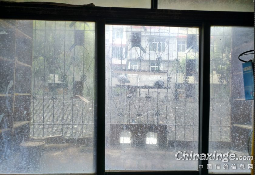 客厅窗户外面的鸽棚