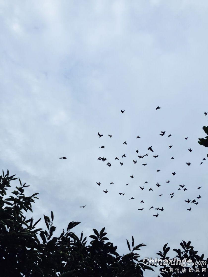 人飞在天空中的头像