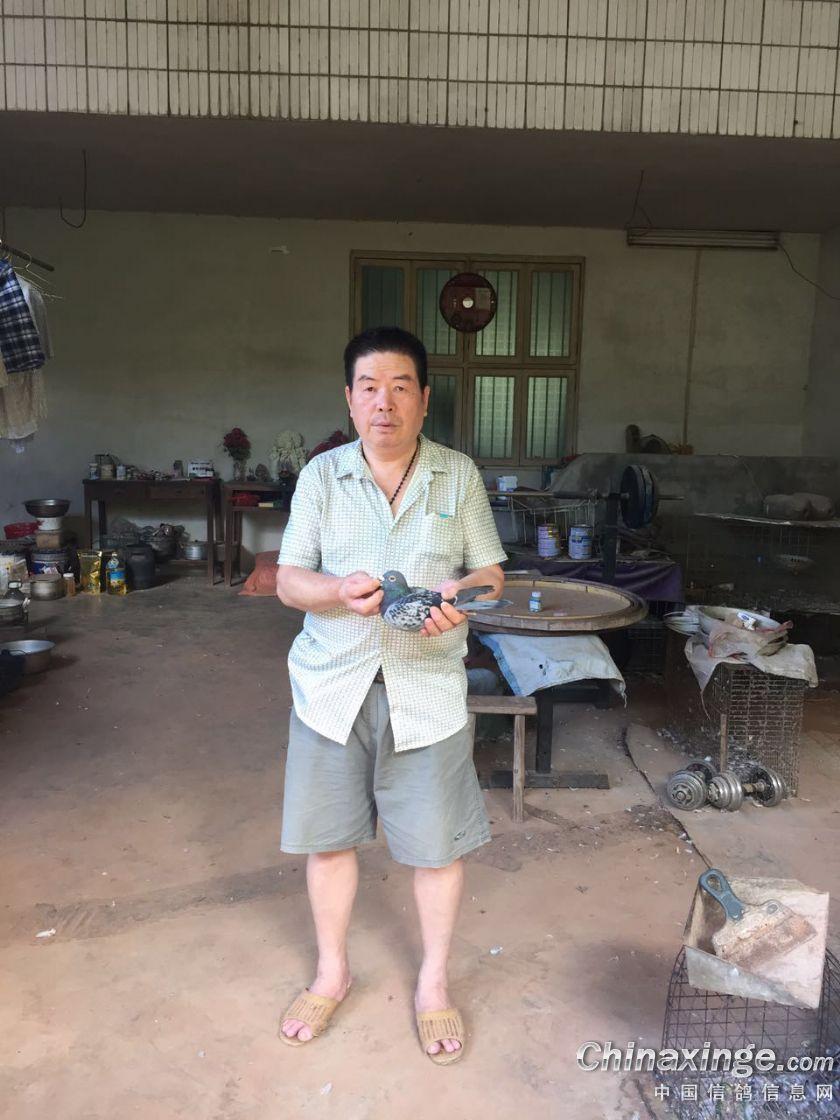 郭氏天马:唯一的爱好与鸽相伴