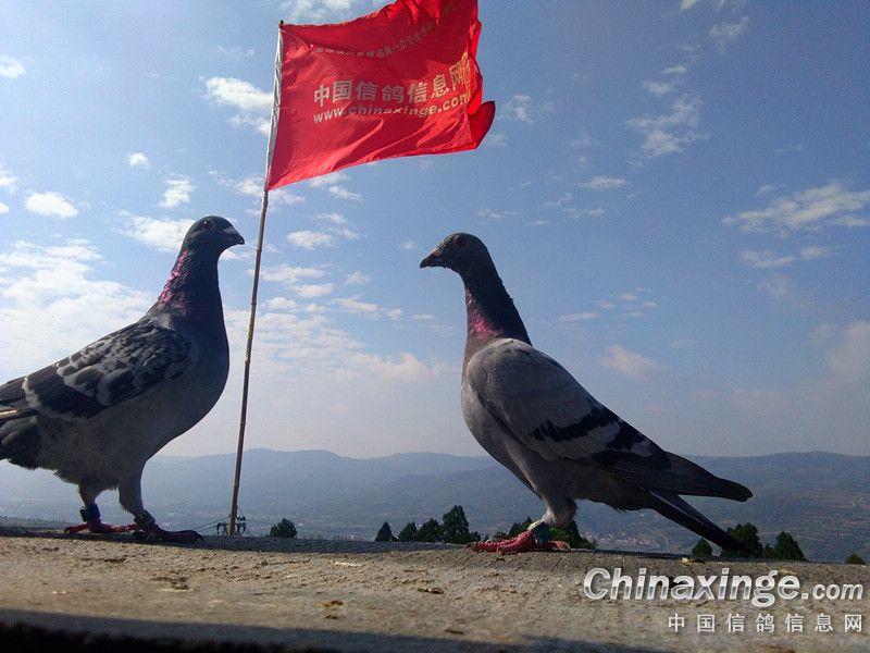 图库经典:养鸽人的早晨