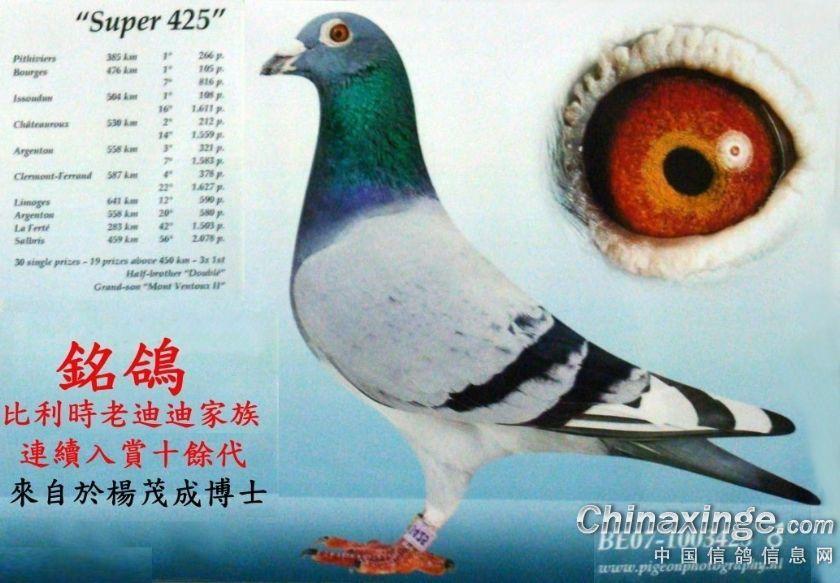 台湾鸽友种鸽舍 全是老血系名种鸽